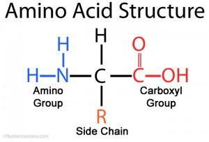 Amino – Acids